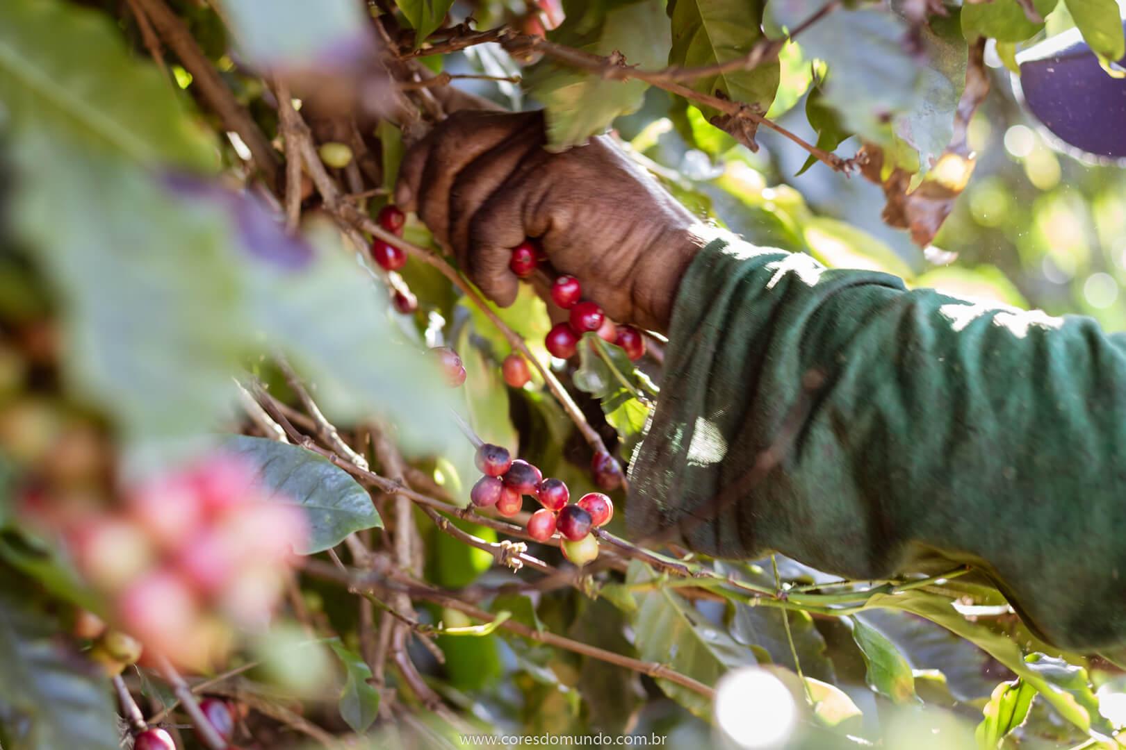 Cafeicultura no ES