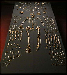 Scientists announce the discovery of Homo naledi, a previously unknown species of early human in South Africa.