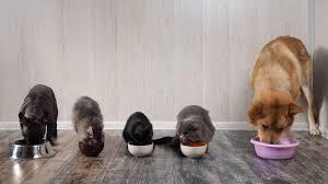 Kitchener, Indira, Sinatra (Runt), Churchill, Mini & Figo