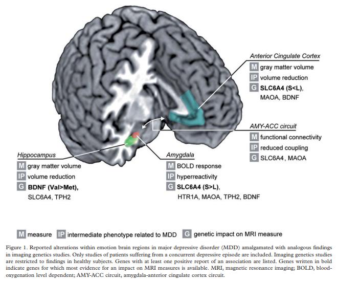 The Genetic Blueprint of Major Depressive Disorder: Contributions of Imaging Genetics Studies, by Scharinger et al.