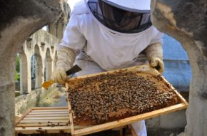 A beehive occupies the roof