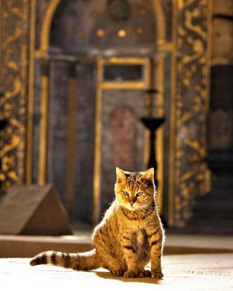 Gli, the guardian cat of Hagia Sophia, is born